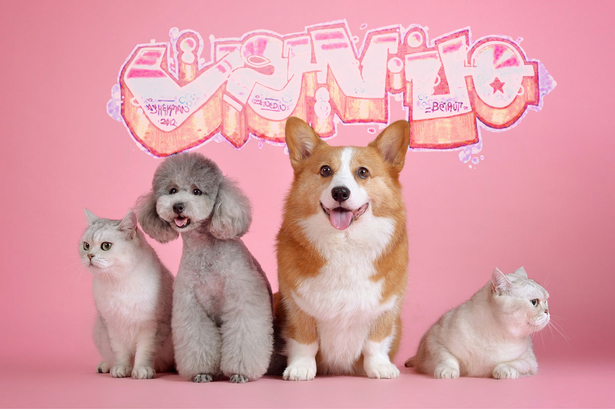 Pets cuteness