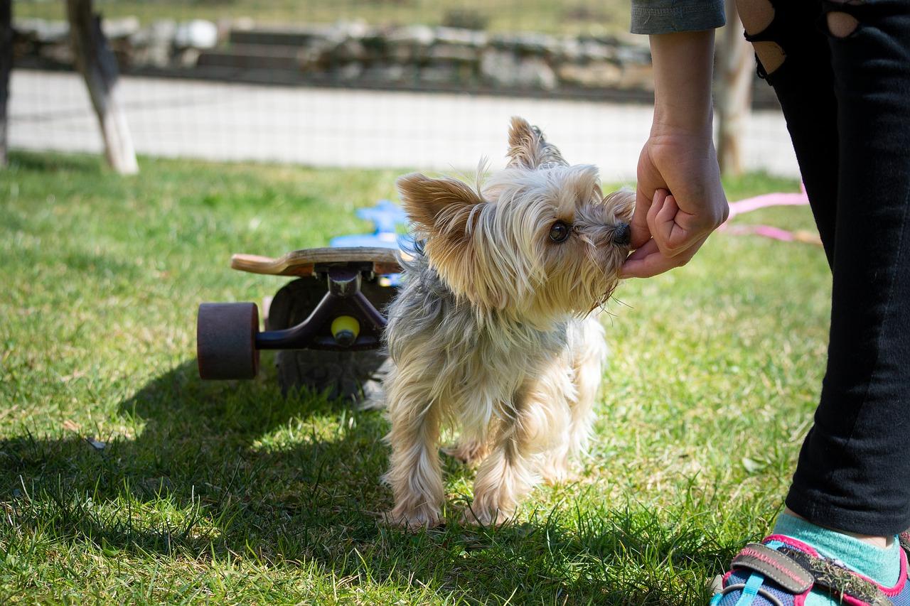 dog treat training
