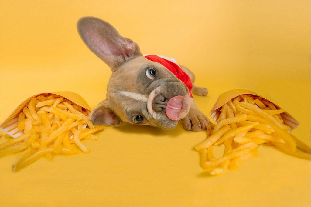 dog food eating diet